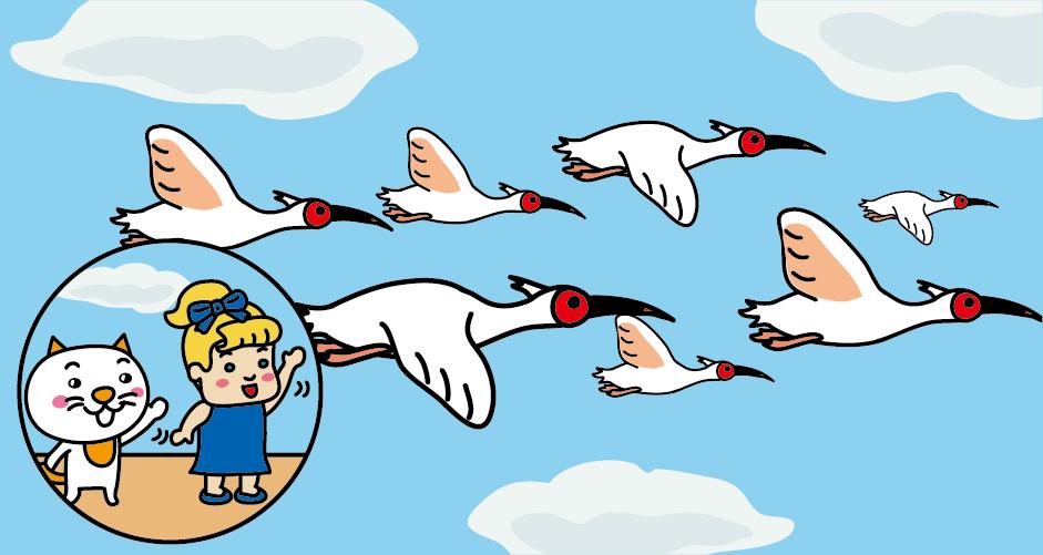 佐渡島 朱鷺 トキ 朱鷺放鳥