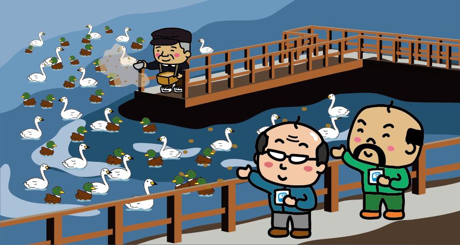瓢湖 白鳥 白鳥おじさん 餌やり