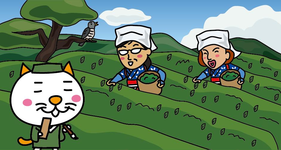 805年、比叡山延暦寺の開祖・最澄(伝教大師)が中国からお茶の種を持ち帰り、信楽の岩谷山に植えて朝廷に献上したのが日本茶のはじまりといわれています。 江戸時代、松尾芭蕉は信楽に立ち寄って「木隠れて 茶摘みも聞くや ほととぎす」の俳句を詠みました。